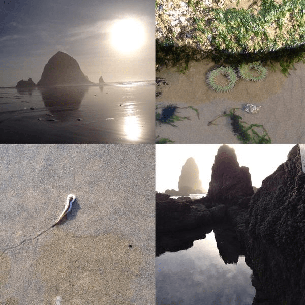 Cannon Beach, 2014