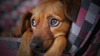 Glaucoma in Dogs and How Azopt and other Hero Eye Drops Help