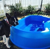 It's Getting Hot in Here — 10 Ways to Keep Your Pooch Happy in the Hot Summer Heat